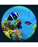 Tropical Fish Solar Effect Wheel